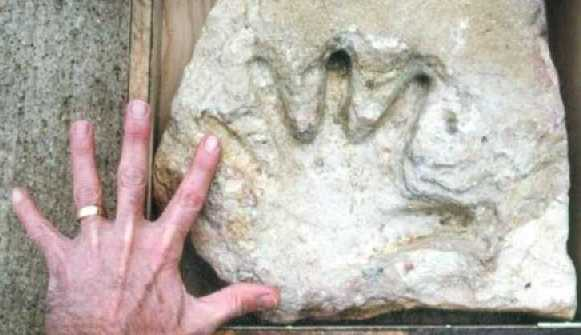 a fossil of a human handprint